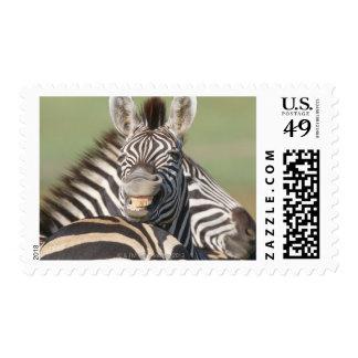 Tala Private Reserve, Kwazulu Natal, South Postage Stamp