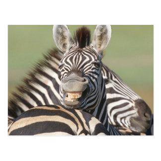 Tala Private Reserve, Kwazulu Natal, South Postcard