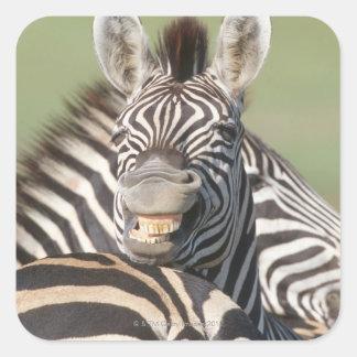 Tala Private Reserve, Kwazulu Natal, South Square Sticker