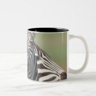 Tala Private Reserve, Kwazulu Natal, South Two-Tone Coffee Mug