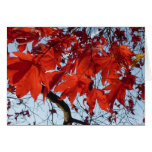 Talk Maple Leaves Greeting Cards