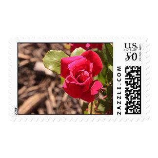 Talk rose postage