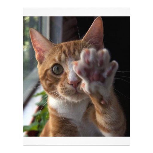 talk to the paw letterhead