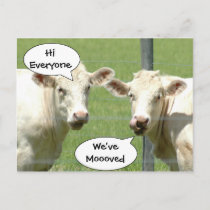 Talking Cows Change of Address Postcard