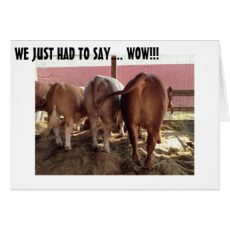 TALKING COWS MAKE GREAT GROUP BIRTHDAY CARD