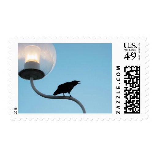 Talking Crow Postage Stamp