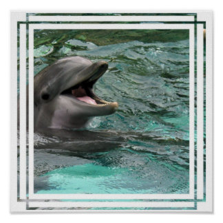 Talking Dolphin Poster