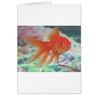 Talking Goldfish Card