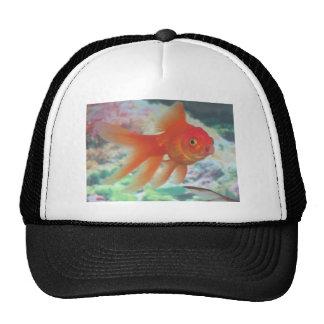 Talking Goldfish Trucker Hat