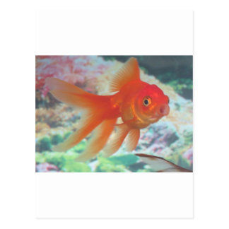 Talking Goldfish Postcard
