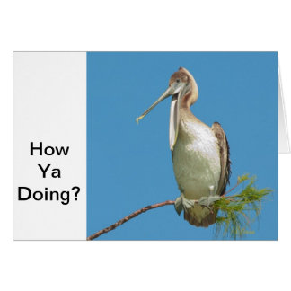 Talking Pelican Card