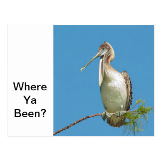 Talking Pelican Postcard