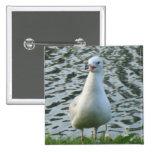 Talking Seagull 2 Inch Square Button