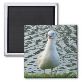 Talking Seagull 2 Inch Square Magnet