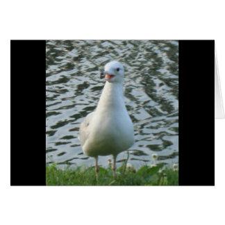 Talking Seagull Card