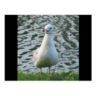 Talking Seagull Postcard