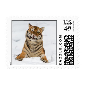 Talking Tiger Small Postage Stamp