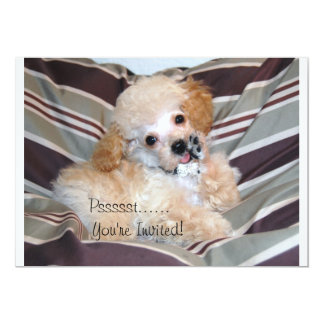 Talking Toy Poodle Puppy Personalized Announcement