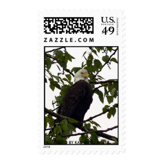 Tall and Proud Postage