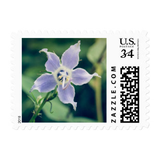 Tall Bellflower Wildflower Postage Stamp