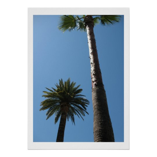 Tall California Palm Trees Poster