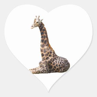 Tall Cute Giraffe Real Animal Photo Heart Sticker