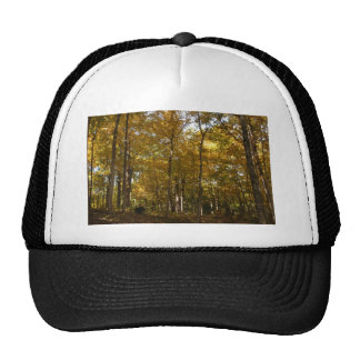 Tall fall color trees hat