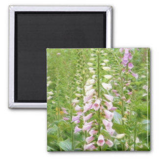 Tall Foxglove - Excelsior Hybrids 2 Inch Square Magnet