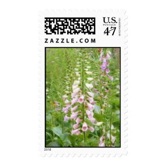 Tall Foxglove - Excelsior Hybrids Postage