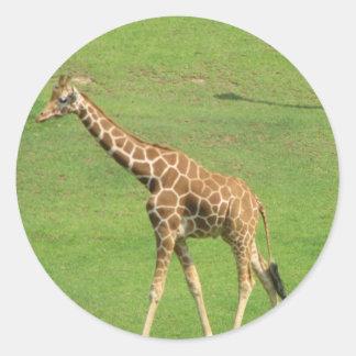 Tall Giraffe Sticker