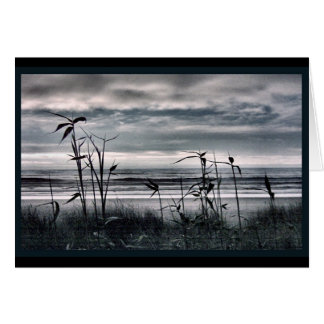 Tall Grass on a Grey Day Greeting Cards
