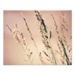 Tall Grass Print 10x8 Art Photo