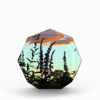 Tall Grasses at Sunset Acrylic Art Acrylic Award