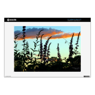 Tall Grasses at Sunset Skins Laptop Decals