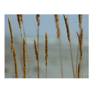 Tall Grasses on Lake Michigan Postcard