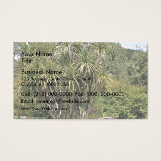 Tall green cabbage tree against the blue sky business card