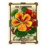 tall nasturtium postcard