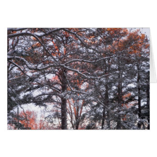 Tall Pine Trees in Snow at Sunrise Winter Photo Card