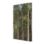 Tall Pines Canvas Print