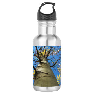 Tall Quaking Aspen Tree Stainless Steel Water Bottle