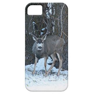 Tall rack buck iPhone SE/5/5s case