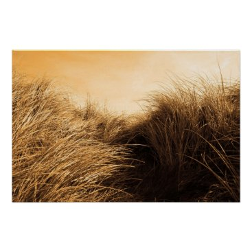 Beach Themed tall sand dune reeds at sunset poster