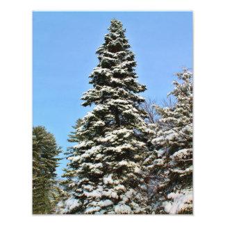 Tall Snow Covered Pine Tree Photo Print