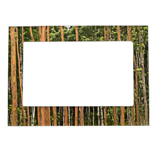 TALL, THIN TREE TRUNKS MAGNETIC PICTURE FRAME