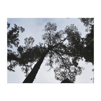 TALL TREE CANOPY TASMANIA AUSTRALIA CANVAS PRINT