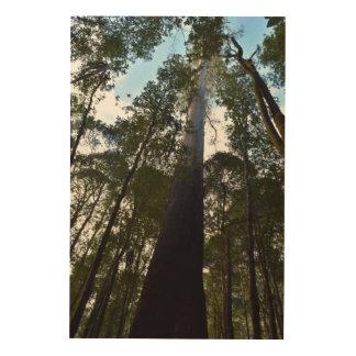 TALL TREE MOUNT FIELD NATIONAL PARK TASMANIA WOOD WALL ART