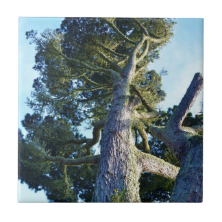 Tall Tree Small Square Tile