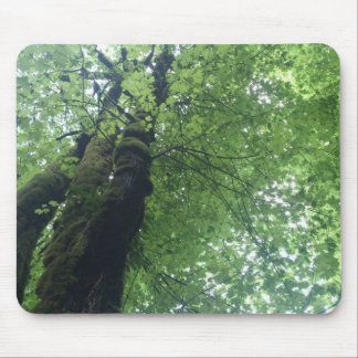 Tall Trees Mouse Pad