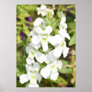 tall white flower poster