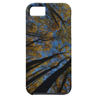 Tall Yellow Trees iPhone SE/5/5s Case